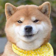 いろんな表情に癒される!Instagramの柴犬がネットで大人気