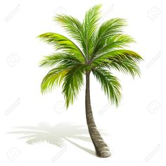 Billedresultat for palmtree