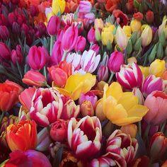 """""""Il est doux de songer que je servirai un jour à faire croître des tulipes."""" Gustave Flaubert"""