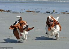 Crazy Running Dogs #RockTheLock