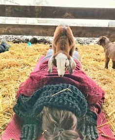 #Goat Yoga: Auf Ziegen und Brechen - SPIEGEL ONLINE: SPIEGEL ONLINE Goat Yoga: Auf Ziegen und Brechen SPIEGEL ONLINE Manche Yogis verbiegen…
