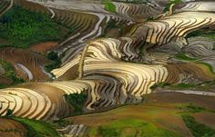 Shiny Rice Terraces, #Vietnam   Photography by ©Nguyen Ngoc Thach via Twitter @AlistairReign & AlistairReignBlog.com