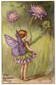 THE SCABIOUS FAIRY by Cicely Mary Barker. Via old school paul on Flickr