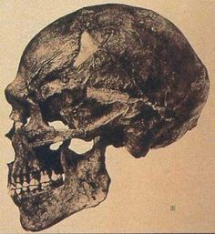 Giant skeletons found in Louisville, Kentucky Cave