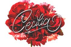 Cecilia Script is a calligraphy style font with a smooth line, dancing baseline, clean, classic and elegant touch. Can be used for various purposes.such as headings, signature, logos, wedding invitation, t-shirt, letterhead, signage, lable, news, posters, badges etc.