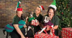 3 puppies, pile of presents to be wrapped… what could go wrong?!