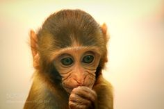 To be or not to be... by Ashraf1976 #animals #animal #pet #pets #animales #animallovers #photooftheday #amazing #picoftheday