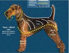 Airedale Terrier Grooming Chart