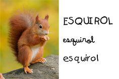 Catalan Language, Colegio Ideas, Animals, Valencia, Ballet Flats, Autumn, School, Fall Projects, Picasa