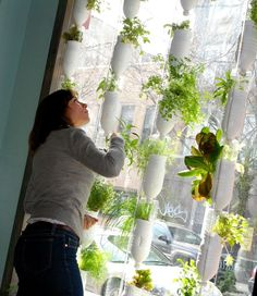 Hydroponic window garden. Made from recycled materials, no soil, and nutrient based water.