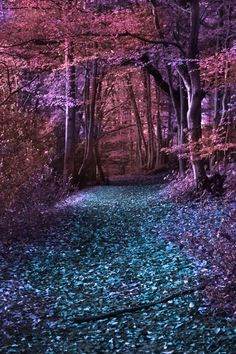 Inspiration | Enchanted Forest