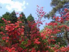 Flowering trees Sweet Trees, Colorful Trees, Flowering Trees, Free Pictures, Her Hair, Earth, Gardening, Doors, Wallpaper