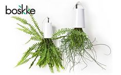 Boskke sky planter