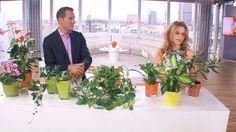 Trujace Kwiaty Doniczkowe Table Decorations Plants Decor