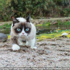 odd_grumpy_cat-walking