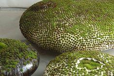 objets : Mousses sur des galets en céramique, Mineo Mizuno, végétation