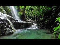 Jungle Waterfall in Full HD - Remake of Forest Spray Np School, Workout Gear, Videos, Beautiful Places, Scenery, Environment, Around The Worlds, Nature, Youtube
