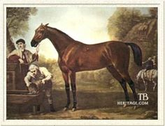 """Matchem(1748)(Colt)Cade- Sister 2 To Miss Partner By Crofts Partner. 5x5 To Darcys Yellow Turk. 12 Starts 10 Wins 2 Seconds.   Matchem Was A Very Influential Sire For The Thoroughbred Breed. He Sired Conductor Who In Turned Sired Trumpator. Trumpator Was A True Distance Sire And His Daughters Including Penelope Helped Passed The """"Big Heart"""" Through Many Generations Of Thoroughbreds And Is Still Influencing Them Today."""