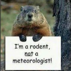 Rodent not a meteorologist groundhog day february 2nd how