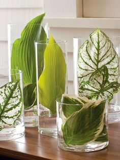 http://elegantlygrounded.com/wp-content/uploads/2014/01/Nature-inspired-accessories4.jpg.  Large leaves like hostas and elephant ears in simple glass cyliners.