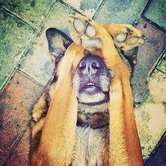 i am shy #shy #animals #cute #pet