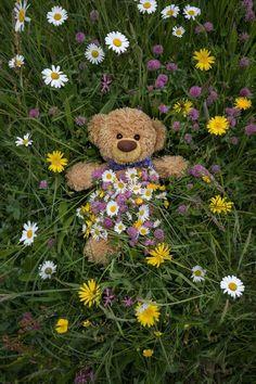 Pink Glitter Wallpaper, Rose Flower Wallpaper, Teddy Bear Images, Teddy Bear Pictures, Bear Wallpaper, Cartoon Wallpaper, Teddy Hermann, Wallpaper Tumblr Lockscreen, Love Bear