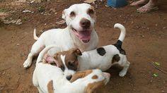 BONDE DA BARDOT: SP: Mãe e filhotes estão num terreno e precisam de um lar urgente em Sorocaba!