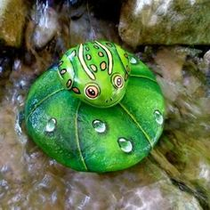 frog painted on a rock - Yahoo Image Search Results Painted Rock Cactus, Painted Rock Animals, Painted Rocks Kids, Painted Pebbles, Pebble Painting, Pebble Art, Stone Painting, Rock Painting Ideas Easy, Rock Painting Designs