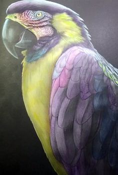 Macaw 2 by Mickie Allen-Boothroyd