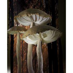 Bei uns hat die #Pilzsaison schon begonnen und zwar gigantisch! In unseren #Dekopilze Sortiment finden Sie eine preislich reduzierte Auswahl an #GigantPilzen in verschiedenen Größen, zu finden in unserer #Herbstkollektion! #künstlichePilze #GigantPilz #reduziert! http://www.decowoerner.com/de/Saison-Deko-10715/Herbst-Halloween-10754/Dekoartikel-Herbst-10763/Gigant-Pilz-braun-weiss-115-cm-632.270.02.html