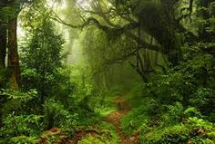 Vinyl FOREST Photography Background Photo Backdrops for Studio Spring Landscape, Landscape Walls, Landscape Wallpaper, Landscape Photos, Forest Photography, Background For Photography, Jungle Tree, Forest Adventure, Adventure Time