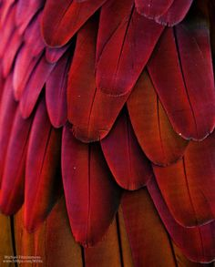 Yellow Feathers, Red Feather, Bird Feathers, Feather Art, Red Aesthetic, Character Aesthetic, Aesthetic Pictures, Arte Plumaria, Exotic Birds