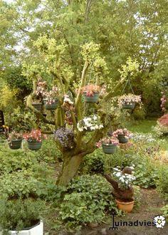Een origineel idee!  Bekijk de tuin van Roeli: http://digituin.tuinadvies.be/account/6989/roeli/fotoalbum/14861
