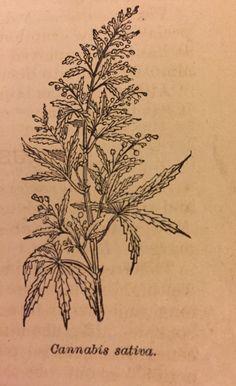 clinicalherbalist:Weed