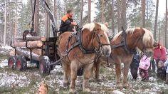 Suomenhevonen Draft Horses, Finland, Friends, Animals, Cutest Pets, Amigos, Animales, Animaux, Animal