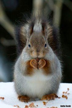 love thissquirrel