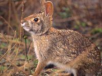 Rabbit Hunting 101