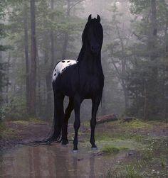 675x720, 87 Kb / лошадь, лужа, вороная