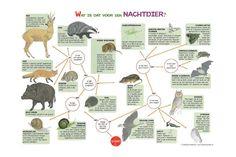 dieren: nachtdieren