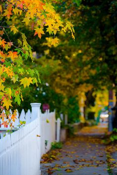 Fall colors on a street in Nevada City. Background Wallpaper For Photoshop, Desktop Background Pictures, Studio Background Images, Light Background Images, Photo Backgrounds, Blur Background Photography, Blur Photo Background, Nature Photography, Foto Pose