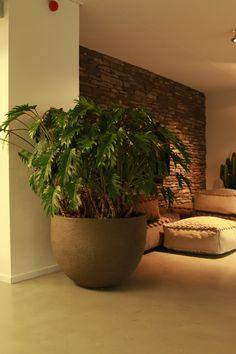 Atelier Vierkant U80G planter with Philodendron xanado.
