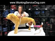 Measuring your dog for a Service Dog Vest, Emotional Support Dog Vest or...