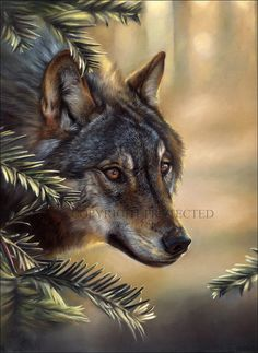 wolf paintings - Google Search