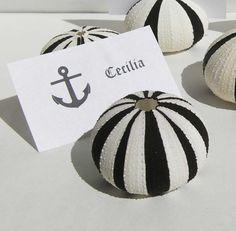 Sea urchin placecards