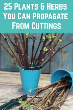 Have you got a favorite herb, flower, bush, shrub, tree or houseplant that you'd love another one of? Then see if you can propagate it from cuttings. Here's 25 that you can propagate from cuttings and how to do it. Outdoor Plants, Garden Plants, House Plants, Garden Seeds, Bucket Gardening, Container Gardening, Gardening Tips, Garden Yard Ideas, Lawn And Garden