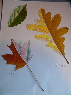 Beautiful Ideas: Leaf Symmetry Drawings... now where to find leaves in Texas?
