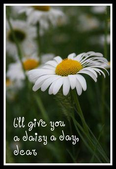 ❀◕ ‿ ◕❀  a daisy a day