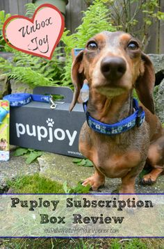 Dog Subscription Goody Box Review PupJoy & New Dog Subscription Box: Happy Dog Box u2013 First Month Free ... Aboutintivar.Com
