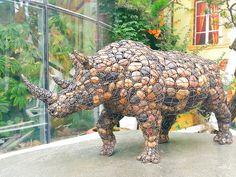 Enclose animal-Rhino