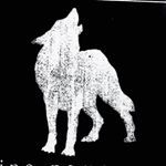 LONE WOLF   private studio (@dinonemec) • Photos et vidéos Instagram Lone Wolf Tattoo, Bad Boys, Moose Art, Lion Sculpture, Instagram, Photo And Video, Studio, Videos, Tattoo Ideas